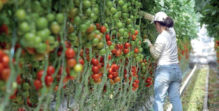 Conseillers agricoles : Une assemblée générale constitutive de leur fédération le 9 septembre à Rabat