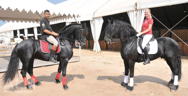 cheval-concours-1
