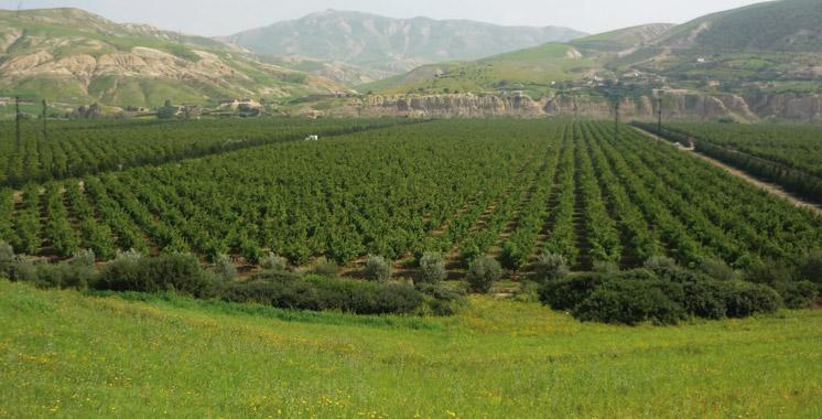 Phytosanitaire et protection des végétaux : Le Maroc s'aligne sur les standards internationaux