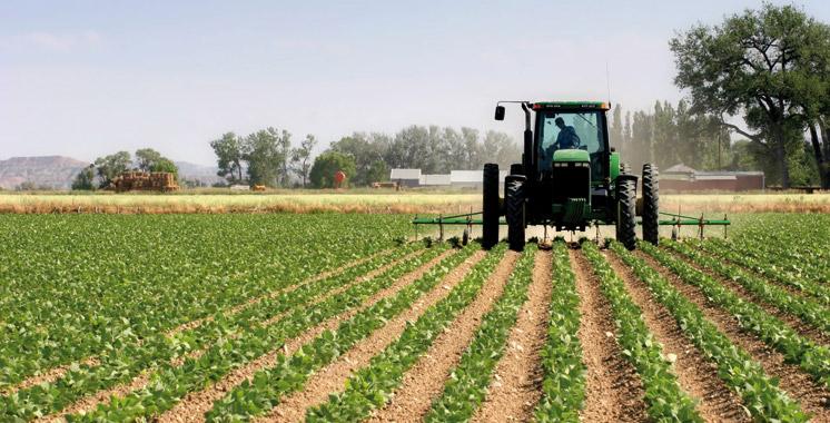 Etude : Le Maroc dans le Top 5 des champions de l'agriculture en Afrique