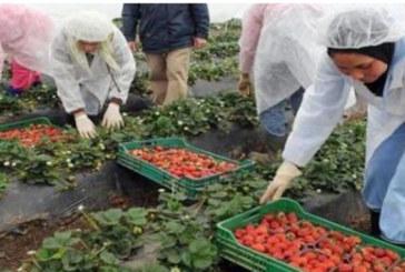 Plus de 2.000 licences de travailleurs saisonniers marocains en Espagne renouvelées en 2016