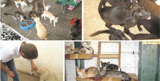 Maltraitance animale: La société civile tire la sonnette d'alarme