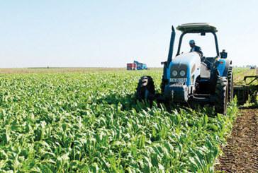 Une production attendue de 220.000 tonnes: La betterave à sucre bat le record à Casablanca-Settat