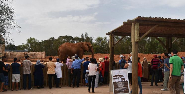 Jardin Zoologique de Rabat : Une fillette de 7 ans tuée par un éléphant