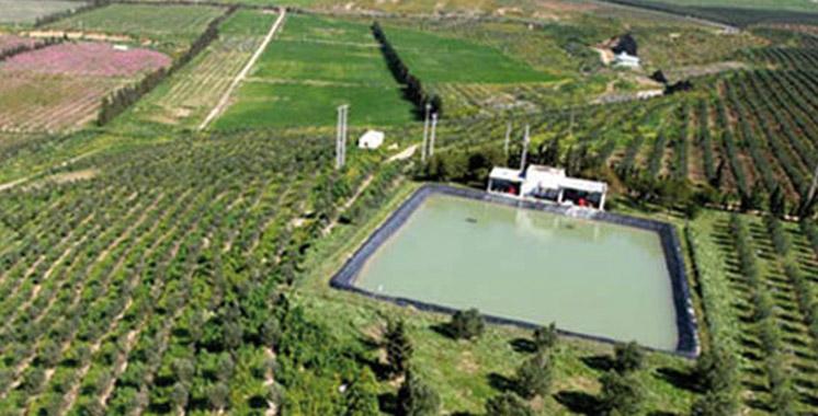 Plan Maroc Vert: 250 MDH pour la filière phoenicicole