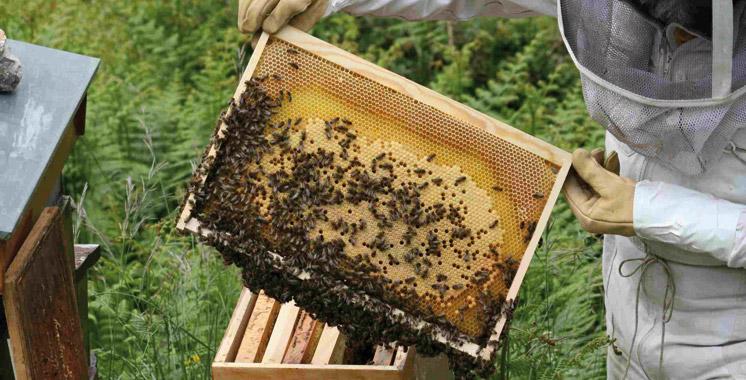 Guelmim-Oued Noun: La Chambre d'agriculture approuve une convention  de partenariat pour développer l'apiculture