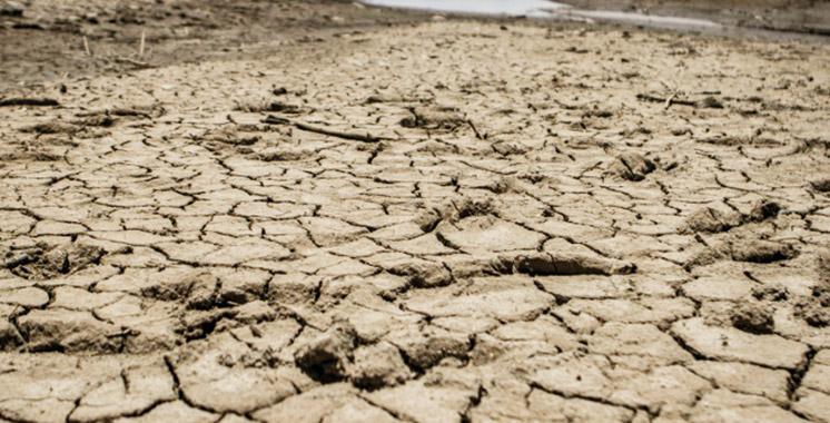 Settat : Les mesures pour lutter contre les effets de la sécheresse