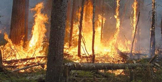 Un feu de forêt se déclare à la province d'Ouazzane