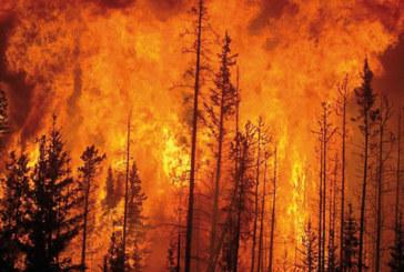 Rif : Plus de 1.700 hectares ravagés par le feu  en huit mois