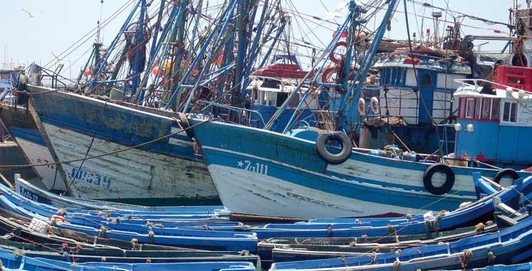Pêche côtière et artisanale : 4,9 milliards  de dirhams générés à fin août