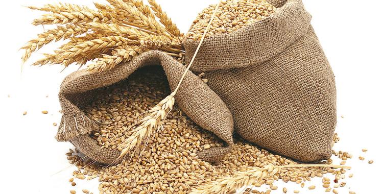 Importation du blé tendre : Les droits de douane augmentent à 135%