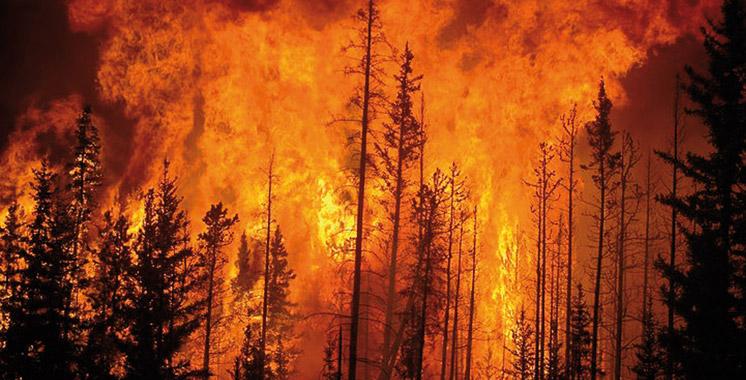 Nouveau bilan :  376 hectares ravagés par  le feu depuis  le 1er janvier