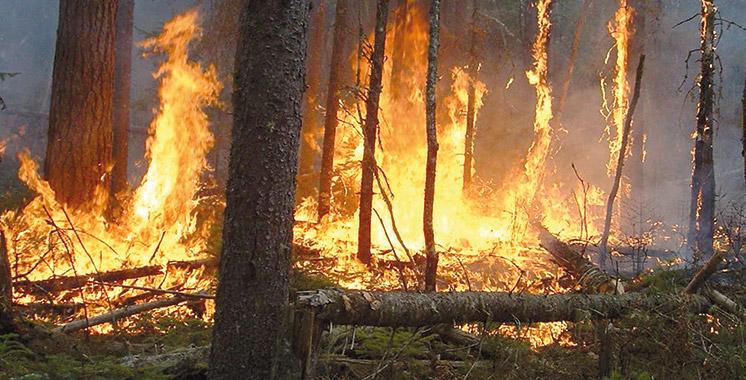 Chefchaouen : Extinction d'un incendie de forêt ayant ravagé environ 7 ha