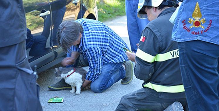 Séisme en Italie : un chat survit 32 jours sous les décombres