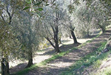 Arboriculture : Près de 10.000 hectares additionnels à prévoir à Al-Hoceima