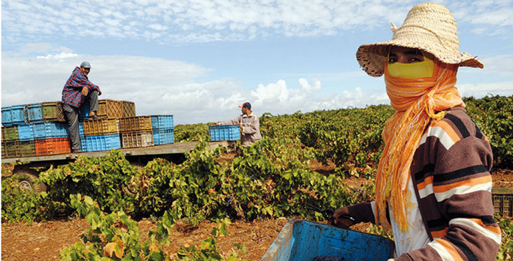 Adaptation au changement climatique : Les petits agriculteurs en première ligne