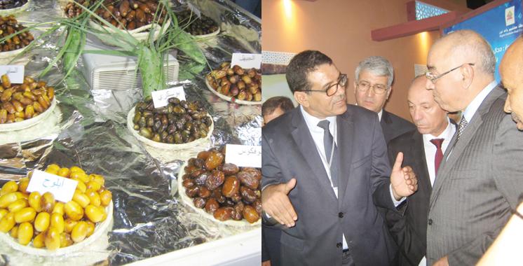 Palmier dattier :  Un record de 128.000 tonnes en 2016