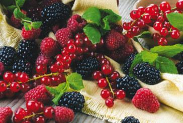 Festival: Larache fête les petits fruits rouges