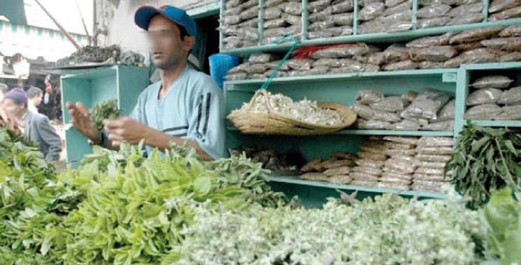 Un centre pour leur valorisation verra le jour à Tanger-Tétouan-Al Hoceima: Les plantes aromatiques et médicinales mises en avant