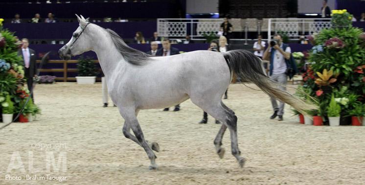 Salon du cheval d el jadida la sorec valorise les for Place salon du cheval