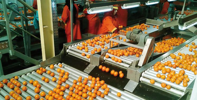 Agrumes marocains aux Etats-Unis: Les exportations reprennent