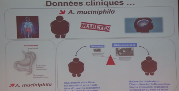 Santé : des belges découvrent un remède pour prévenir le diabète et l'obésité