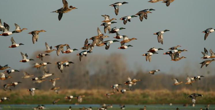 France : Un cas de grippe aviaire détecté
