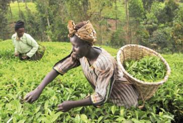 Ithmar Capital et la Banque mondiale s'allient: Le fonds d'investissement vert dédié au continent africain est lancé