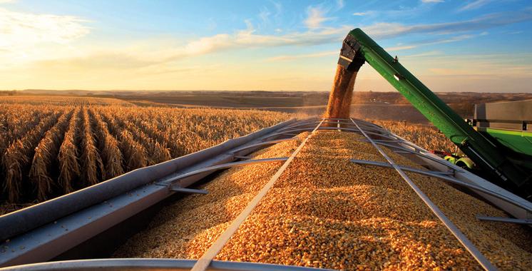 Orge subventionnée: Près de 360.000 quintaux attribués aux agriculteurs de Khémisset