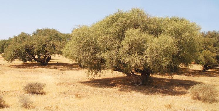 Salon Fitur: L'arganeraie consacrée comme forêt durable