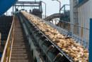 La production de la betterave estimée  à 1,5 million de tonnes en 2017