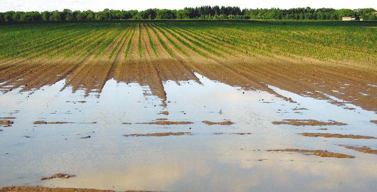 Campagne  agricole :  Un début  de bon augure