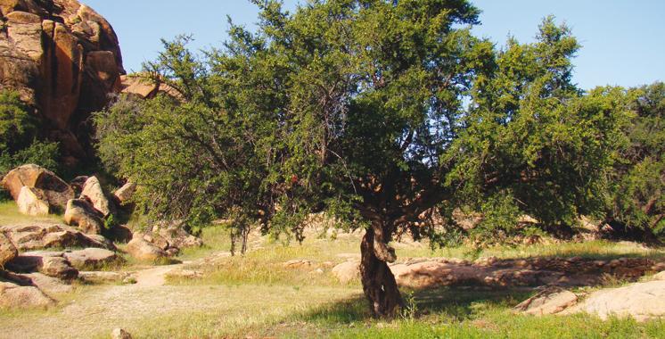 Programme DARED d'arganiculture : 400 Ha d'arganier de plus plantés à Tiznit