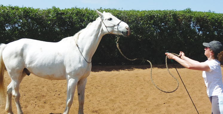 cheval-equicoaching