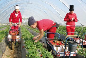 Cueillette des fruits rouges:  Rabat et Madrid déterminés à développer l'expérience des ouvrières saisonnières