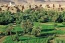 Assa-Zag : Les oasis locales sous le feu des projecteurs