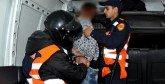 Marrakech : Des voleurs de palmiers arrêtés en flagrant délit