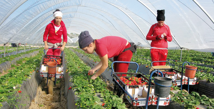 Campagne 2018-2019 de cueillette des fraises à Huelva : Le Maroc et l'Espagne tirent un bilan positif