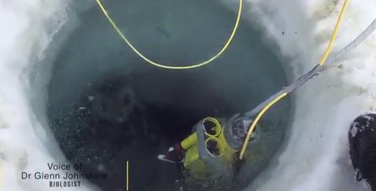 Vidéo : Un robot filme des images de la vie sous la glace en Antarctique