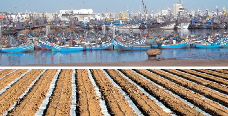 Création d'entreprises: L'agriculture et la pêche maritime ont toujours la cote à Dakhla