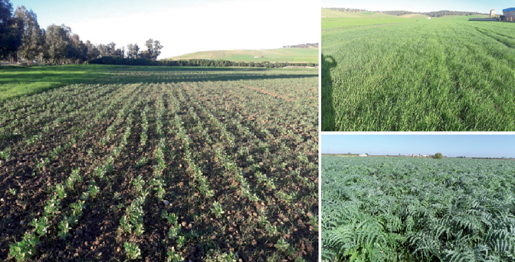 315.000 ha semés en céréales, soit 100% de la superficie programmée