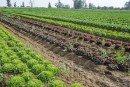 Les précipitations perdureront jusqu'à vendredi: Une bonne campagne agricole en perspective