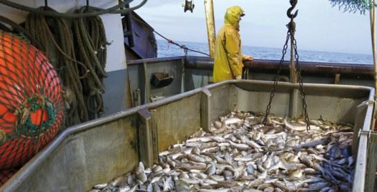 Pêche 2016-2017 :  Une production estimée à 16.000 tonnes pour une valeur de 160 MDH