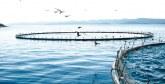 Aquaculture marine: Une nouvelle charte  en voie d'approbation