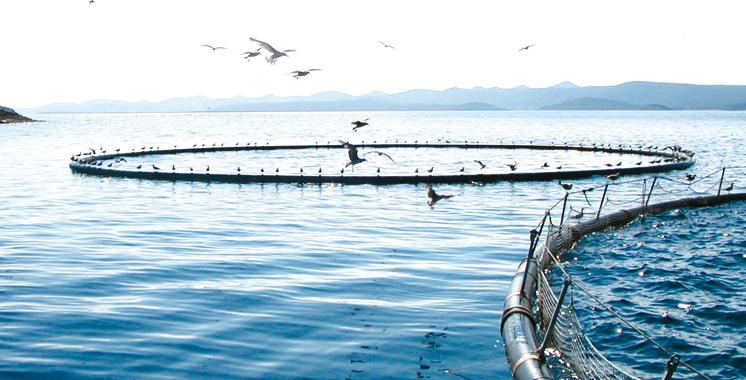 Souss-Massa : L'ANDA veut valoriser le potentiel aquacole