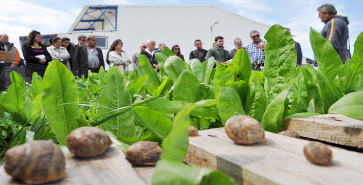 Héliciculture : Nécessité de mettre en place une stratégie de développement