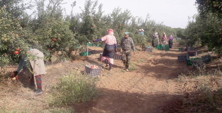 La campagne agricole s'annonce prometteuse à fin janvier à El Jadida