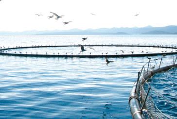 Plan aquacole de Dakhla-Oued Eddahab : Deux millions DH pour les études techniques de viabilisation de la zone Cintra
