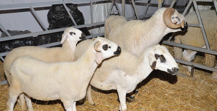 Salon du Sardi : Vers une véritable politique publique de l'économie de l'élevage