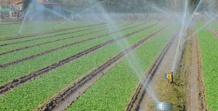 Préservation de l'environnement: Plus de 200 MDH pour un projet d'irrigation en eaux usées traitées à Oujda Angad